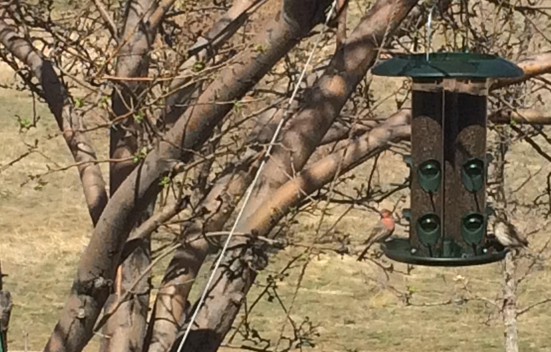 IMG_0715 - spring bird feederrCopy