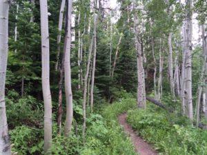 IMG_0126 tree path