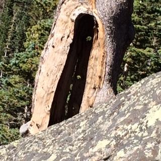 IMG_0212 small tree door closeup
